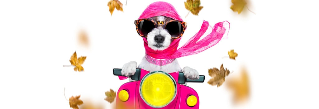 Dog in a motorcycle with falling leaves